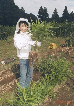 ミニ農園で初めての生姜収穫